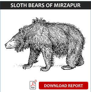 Sloth Bears of Mirzapur-Report Link